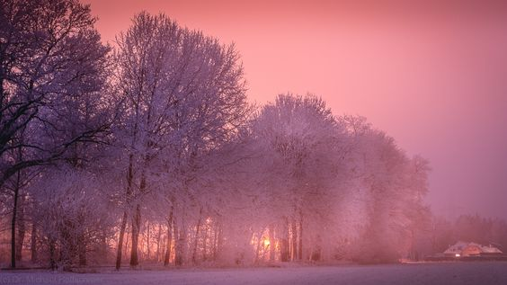 Lights between wintry frozen trees by Michael Hoffschroer - Photo 138658363 - 500px