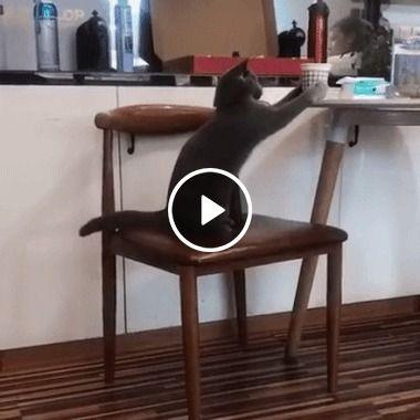 Esse gato foi tomar um copo de água mas acabou caindo