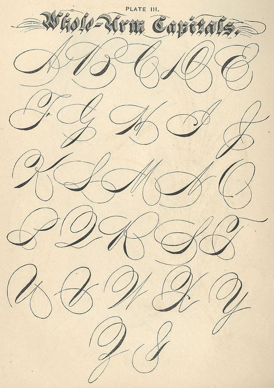 Penmanship Flourishes Click To Enlarge Calligraphy