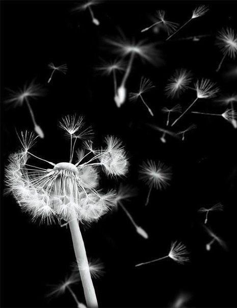 #art wind blowing the dandelion