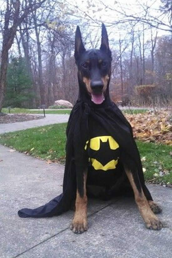 10 Best Halloween Costumes For Large Dogs Big Dog Costumes