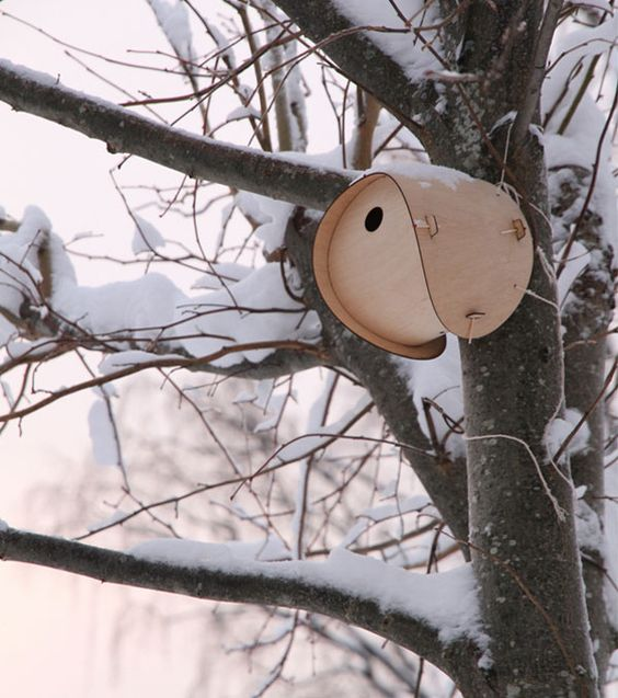 Spatial bird house!:
