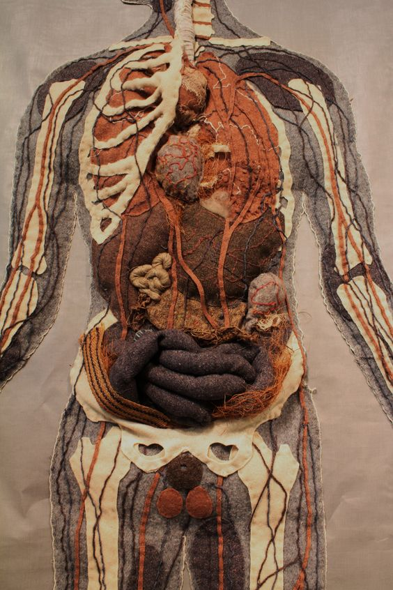 Specimen # 8.Medical chart .detail .soft anatomy sculpture by Andrew Delaney .Anno Domini Home . The Vivisector .
