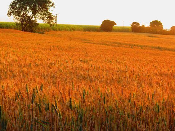 Kansas - Fazenda