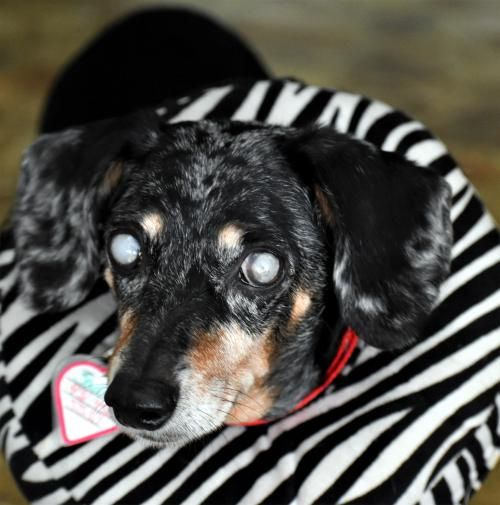 Hi There Sadie Here I Know I M The Most Gorgeous Senior