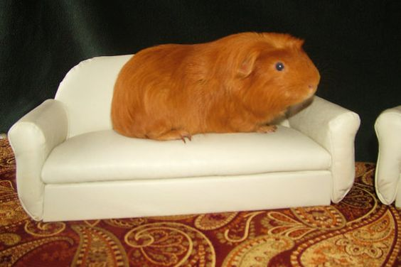 Guinea Pig, Ferret White Loveseat - Bed Furniture. $63.00, via Etsy.