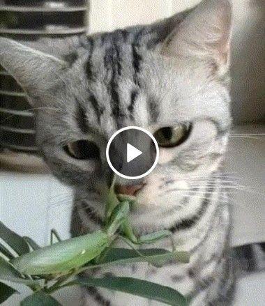 Sai da planta da mamãe seu grilo intruso