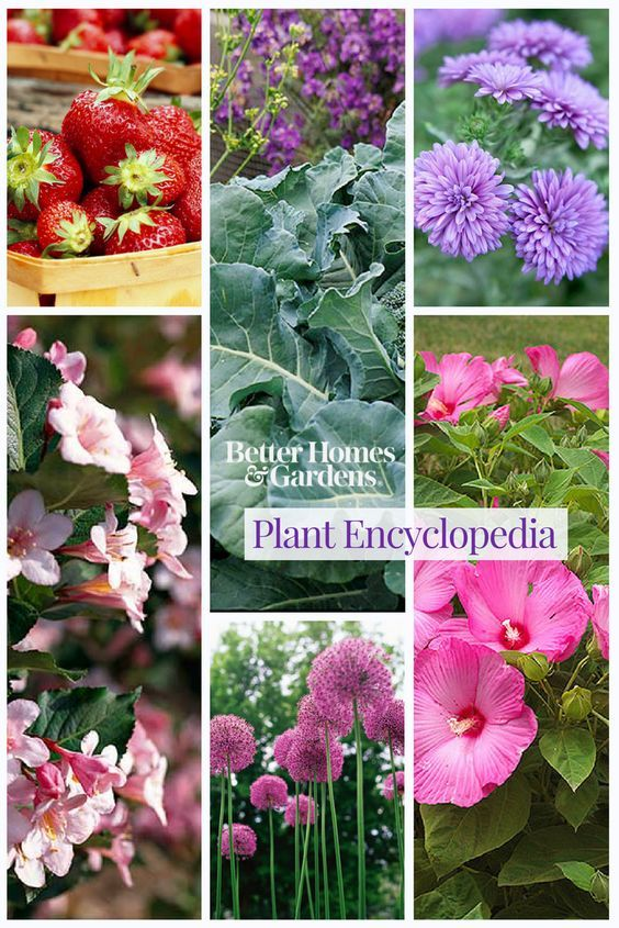 16eb71e20232e892c22746a157956cff - The Gardener's Encyclopedia Of Plants And Flowers