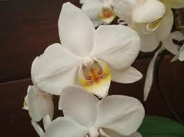 imagem de flores - Pesquisa Google