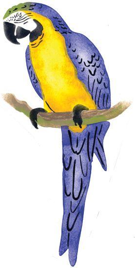 Rainforest Parrot Rainforest Parrot Home Decor Stencil