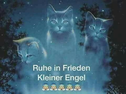 Pin Von Michaela Ruhl Auf Trauer Haustier Erinnerung Katzenspruche Susse Tiere