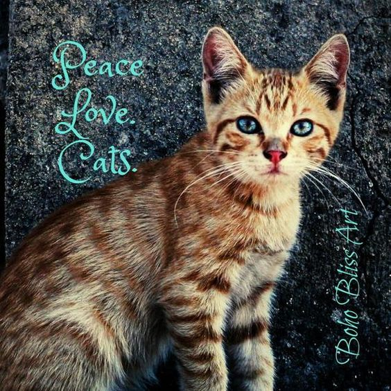 Peace. Love. Cats. Cute Kitten Quote Wall Art | Instant Download | Purrfect Gift for the Cat Lover! #CatQuote #CatQuoteWallArt #AnimalQuote #KittenWallArt #CatQuoteSign #CatSign #CatLoverGift #Etsy