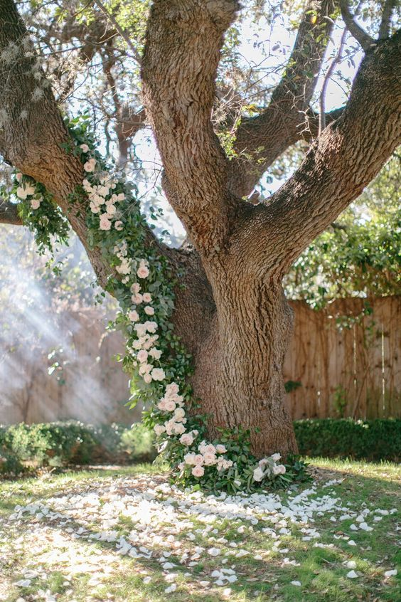 Omg climbing roses on a tree. This is what my dreams are made of.