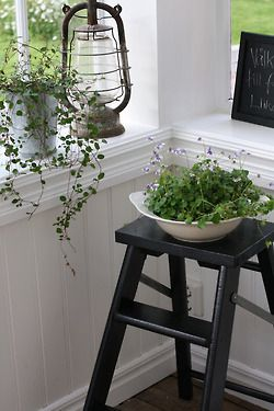 Another pinner said: hanging plants, plants in bowls, let's fill the house with plants :)    I couldn't agree more. :)