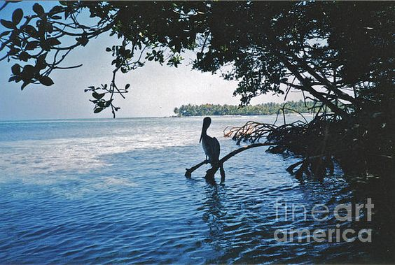 Gone Fishing in Belize by William Norton