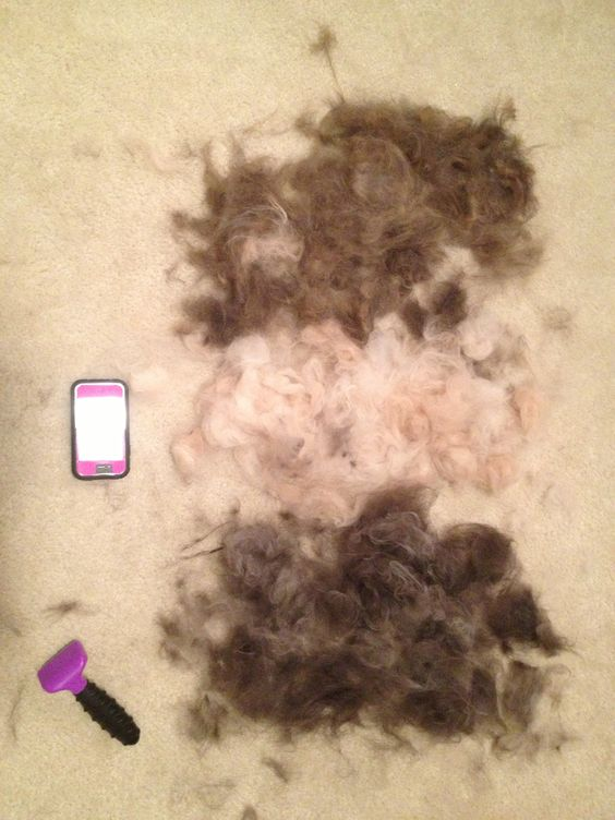 Aftermath of brushing the cats. We have too many cats...