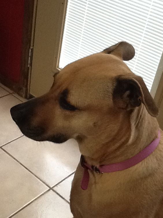 Lexie, she is a black mouth cur,she was adopted.  Her and her family lived at a gas station, the owner did not want them so she shot  the mother and her brother and sisters someone saved her she was the only one saved
