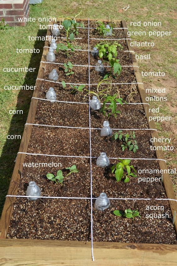 Gardens the plastics and the plant on pinterest - Square meter vegetable garden ...