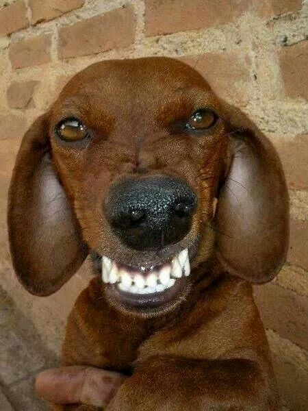 Ugly Mean Dog Pictures