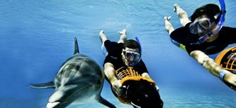 Swimming with the dolphins in Nassau.  This is so much fun!