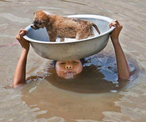 Water- Dog both mans best friend