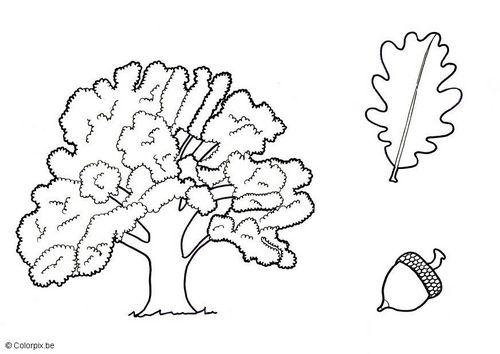 11+ Dibujo de arbusto para colorear inspirations