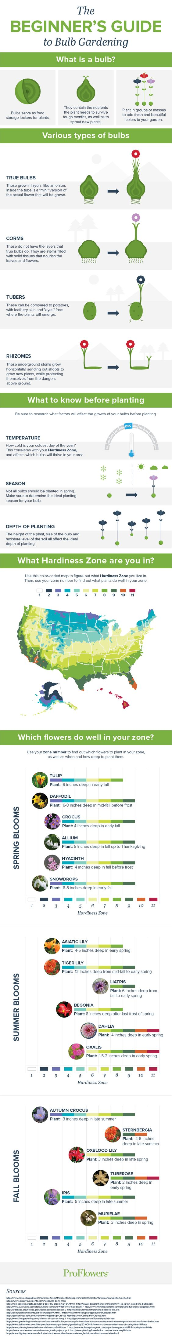 Thinking of starting a bulb garden? Got a million questions? This is a must-read before you begin!