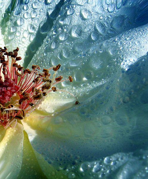 Dewdrops on flower