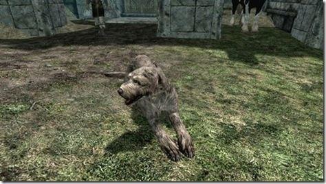 Vigilance the Companion Dog!!