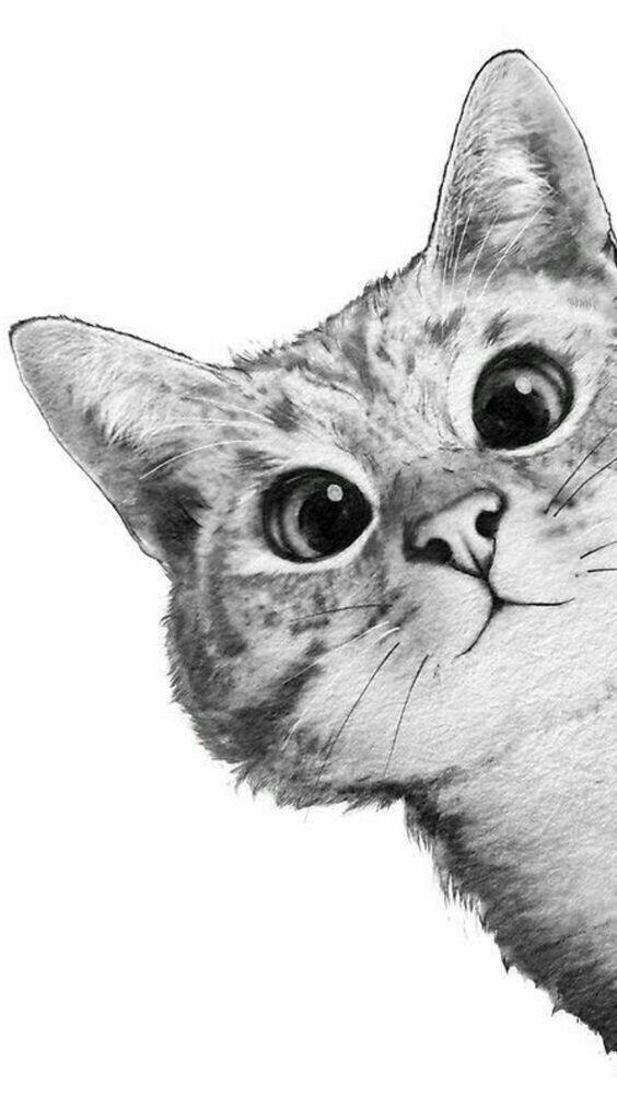 Imagen Sobre Gatos Bonitos De Licht Schatten En Katzen Fondos