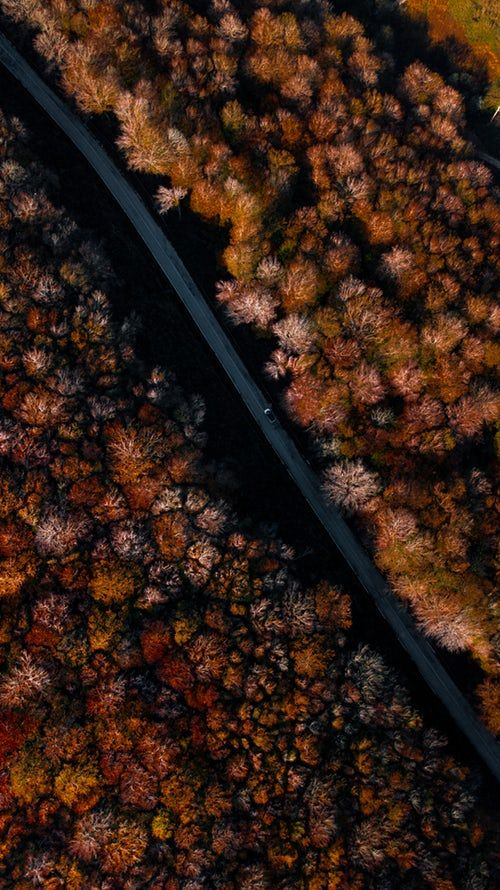 Beautiful Free Images Pictures Unsplash Fall Wallpaper Tumblr Aerial Photography Drone Forest Photos