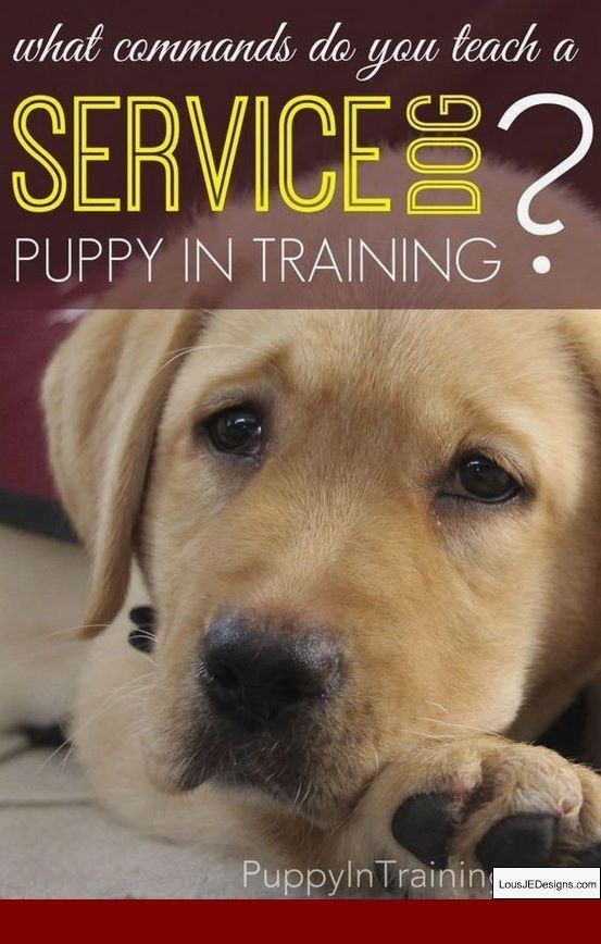 How To Train Your Dog To Backflip and Pics of How To Teach Your Dog Not To  Bark At Everything. Tip 2045959 | Dog training, Puppy training, Pet training