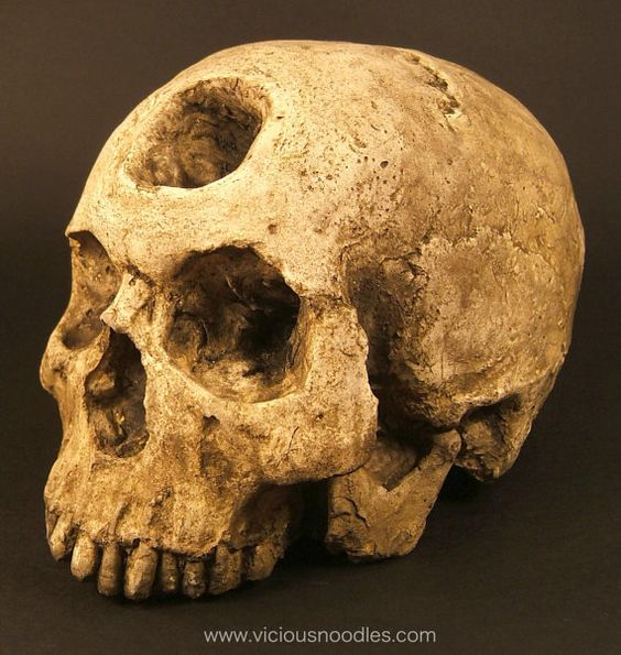 HUMAN SKULL REPLICA with three eye sockets, realistic ... | 564 x 595 jpeg 66kB