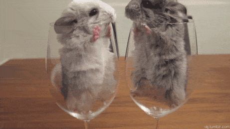 Incredibly adorable kissing mice (click to see animation!)