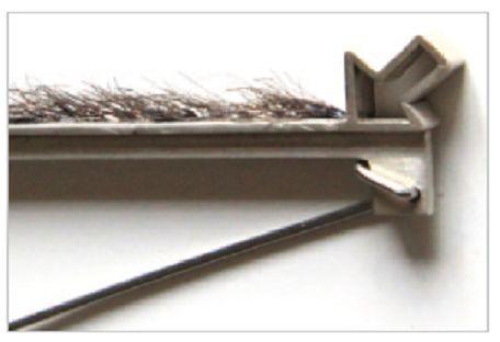 galatée Pestre - broche poils:
