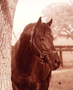 Mr Prospector- (1970–1999) was a thoroughbred racehorse foaled in Kentucky whose descendants have been dominant in the United States Triple Crown of Thoroughbred Racing. He won half of his 14 career races and never contested the Triple Crown. Still a good horse though