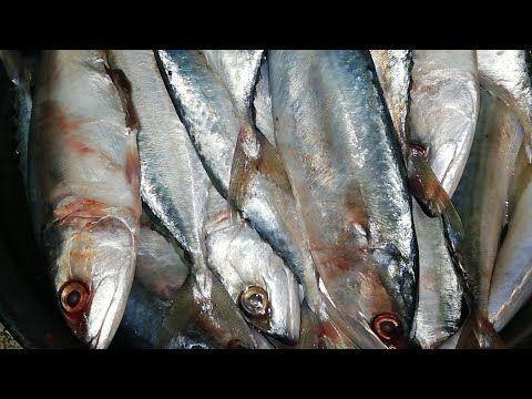 آلذ صينية سمك باغة Delicious Blue Runner Recipe Youtube Fish Meat Recipes
