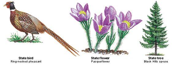 south dakota state bird flower and tree united states pinterest south dakota