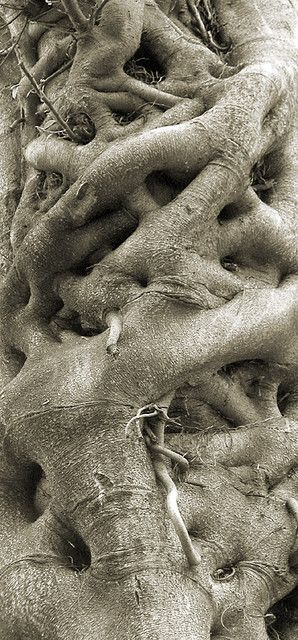 We are rooted and grounded in Him. Our roots go back before the earth was formed.