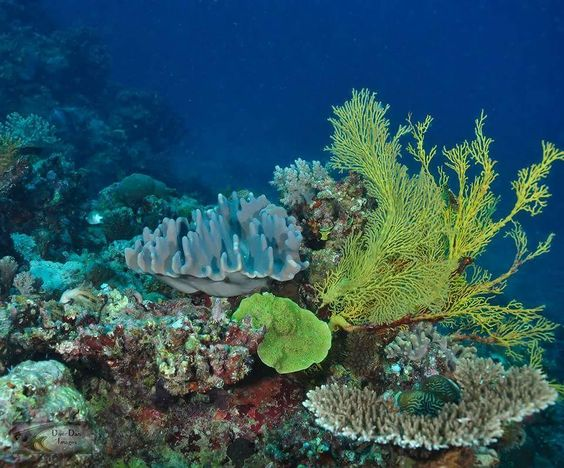 The colours of the central GBR May 2016 Bait Reef.  #underwaterphotography #uwphotography #nikon #nikonphotography #ikelite #coralgarden #coral #gbr #greatbarrierreef #lifeonthereef #underwaterlandscape #coralscapes #baitreef #hamiltonisland by cooney_d http://ift.tt/1UokkV2