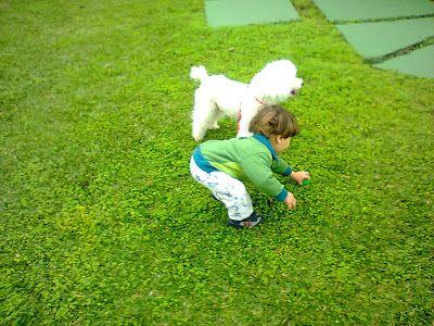 Ter animais é muito importante para ajudar no desenvolvimento das crianças