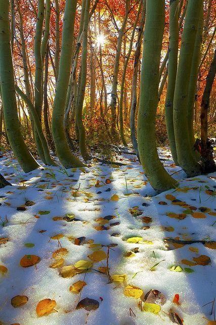Autumn and Winter meet ♡