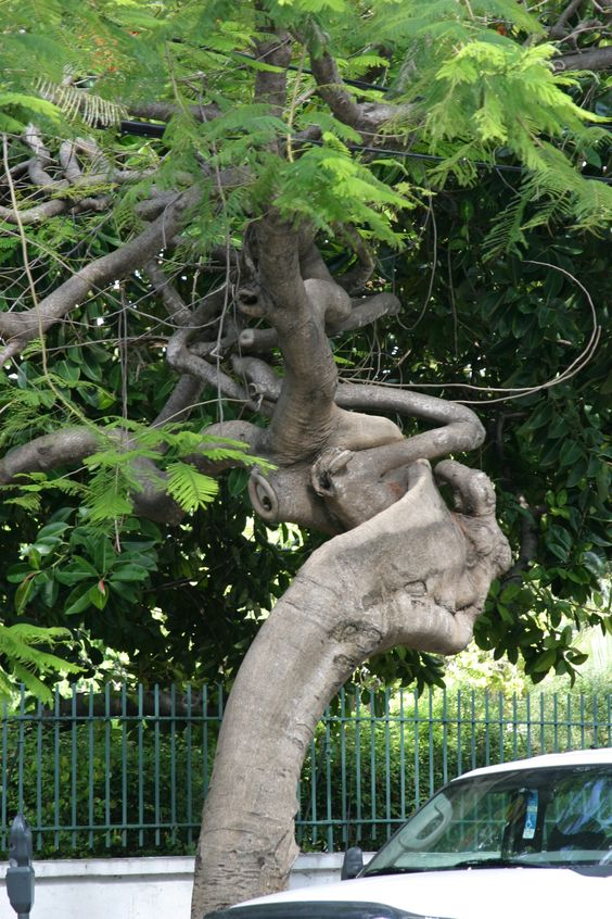 Key West, Florida - what a crazy tree! Mean looking too - it's looking at you!: