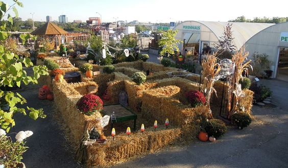 Fall Festival, Pumpkins, Mums, Downers Grove, Naperville, Glen Ellyn