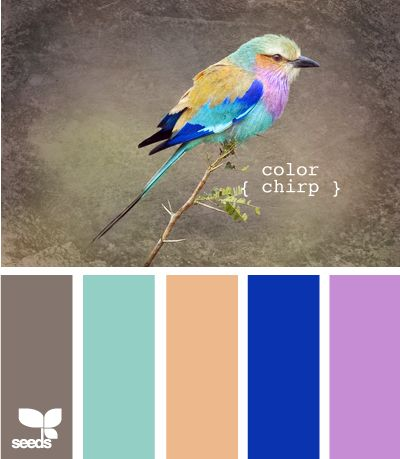 color chirp