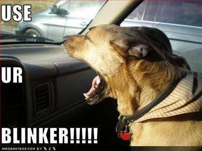 Dog In Car It S Called A Blinker