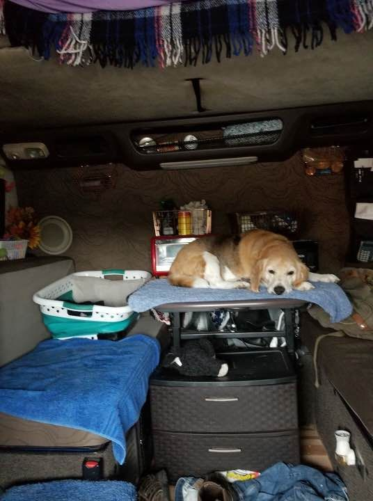 Lost Dog Female South Zanesville Oh Usa 43701 Losing A Dog