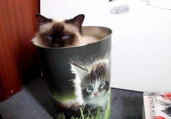 I bought myself a cat bin and knew this needed to be done - http://cutecatshq.com/cats/i-bought-myself-a-cat-bin-and-knew-this-needed-to-be-done-2/
