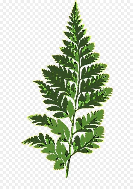 10 Fern Png Cartoon Plant Leaves Png Plants