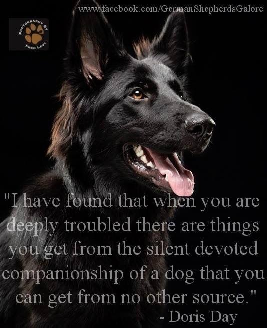 The German Shepherd Love Understanding Non Judgemental Loyal Protector Caring Four Paw Companion Sweet Happy German Shepherd Dogs Dog Quotes German Shepherd